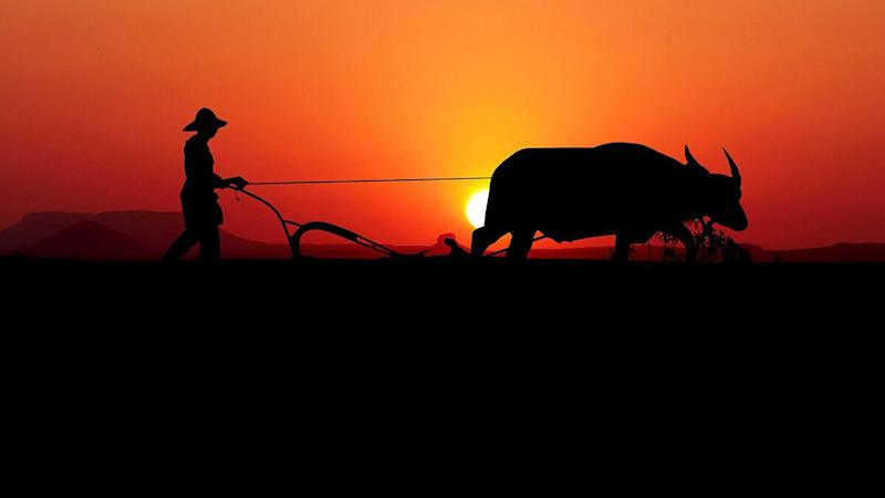 National Farmers' Day 2020 Date, History and Significance: Know Everything About the Day Dedicated to the Hard-Working Farmers