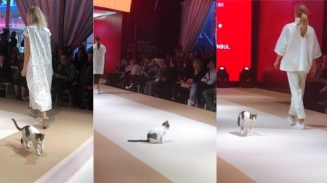 Possibly the most hilarious moment in fashion was witnessed at a fashion show in Istanbul recently, when a cat walked the ramp alongside models.