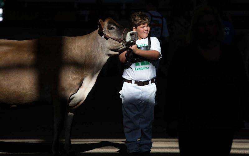 A participant in the Youth Dairy Cattle Show walks his cow through the Livestock Pavilion. The event teaches children about proper livestock care and showmanship techniques. | Jason Bergman