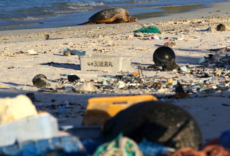 Pictured is a green sea turtle sitting among plastic. Source: AP/Caleb Jones