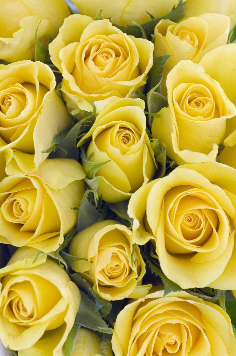 """<p>You wouldn't think it's cruel to gift someone a bouquet, but these sunny flowers imply <a href=""""http://www.lillysrosegarden.com/rose-colors-symbolism.html"""" rel=""""nofollow noopener"""" target=""""_blank"""" data-ylk=""""slk:jealousy and infidelity"""" class=""""link rapid-noclick-resp"""">jealousy and infidelity</a>. In modern times, however, this variety is associated with friendship and cheer due to the vibrant color. </p><p><a class=""""link rapid-noclick-resp"""" href=""""https://go.redirectingat.com?id=74968X1596630&url=https%3A%2F%2Fwww.1800flowers.com%2Fsunshine-roses-104514&sref=https%3A%2F%2Fwww.goodhousekeeping.com%2Fholidays%2Fvalentines-day-ideas%2Fg1352%2Frose-color-meanings%2F"""" rel=""""nofollow noopener"""" target=""""_blank"""" data-ylk=""""slk:SHOP YELLOW ROSES"""">SHOP YELLOW ROSES</a></p><p><strong><strong>RELATED:</strong></strong> <a href=""""https://www.goodhousekeeping.com/holidays/easter-ideas/g1906/easter-flowers/?slide=1"""" rel=""""nofollow noopener"""" target=""""_blank"""" data-ylk=""""slk:23 So-Pretty Easter Flower Arrangements and Centerpieces"""" class=""""link rapid-noclick-resp"""">23 So-Pretty Easter Flower Arrangements and Centerpieces</a> </p>"""