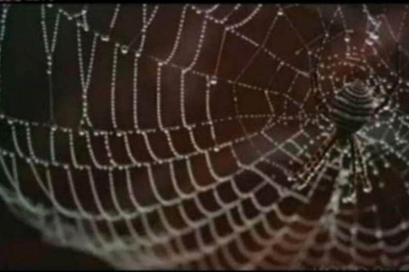 Scientists Produce 'Excellent' Quality Recyclable Silk with Spider DNA and Microbes