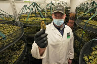 Jake Crisco, general manager of the Green Leaf Medical Cannibis facility holds a mature bud of marijuana at the company's plant in Richmond, Va., Thursday, June 17, 2021. The date for legalizing marijuana possession is drawing near in Virginia, and advocacy groups have been flooded with calls from people trying to understand exactly what becomes legal in July. (AP Photo/Steve Helber)
