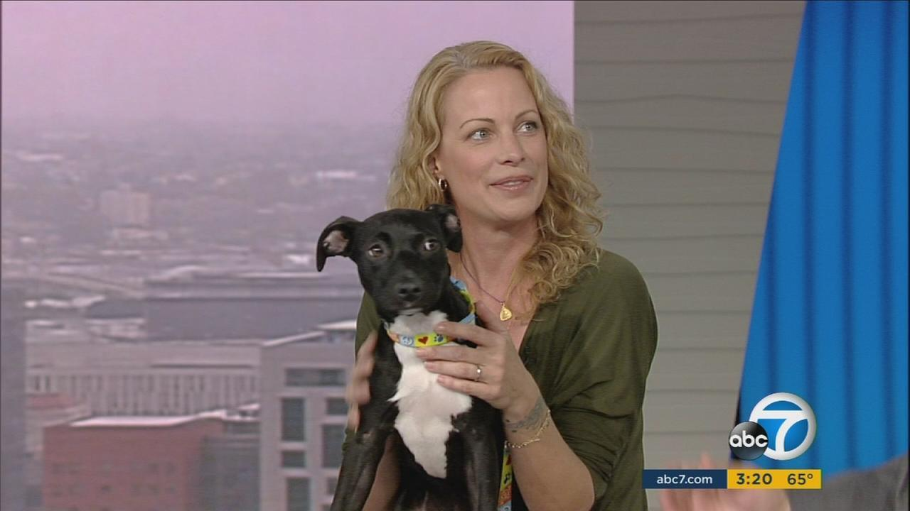 Actress and fashion designer Alison Eastwood - daughter of Clint - is launching a new online network to connect shelter animals with foster families.