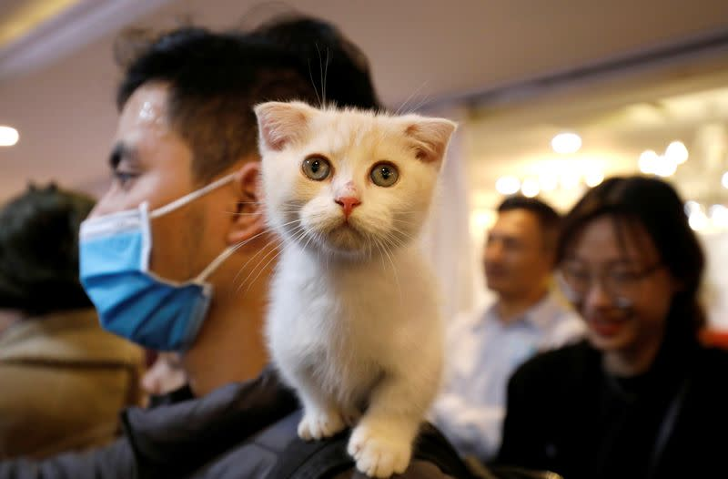 A cat is seen on the shoulder of her owner during the Vietnam's first cat show in Hanoi