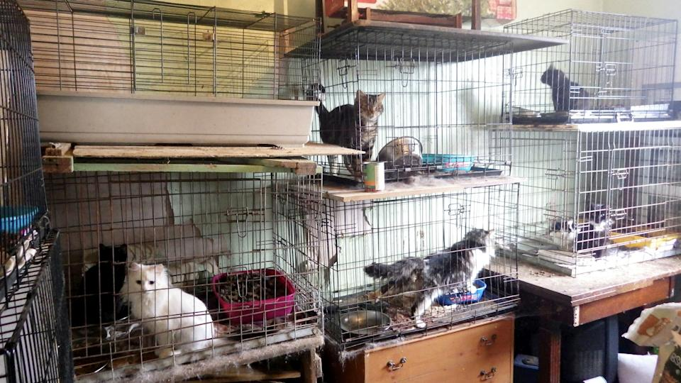 The animals were found locked in tiny faeces-ridden cages at a home in Essex. (SWNS)