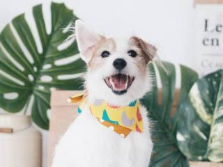 Ohpopdog SS 17 Collection Colourful Chick Bandana | Vanillapup