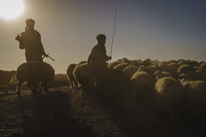 A police officer patrols a patch of land next to a shepherd and sheep.
