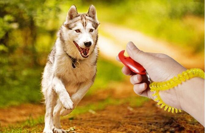 康遠?台灣現貨?寵物響片 響片訓練 Clicker專業寵物訓練用 訓犬 鸚鵡 貓狗鳥寵物居家訓練響片