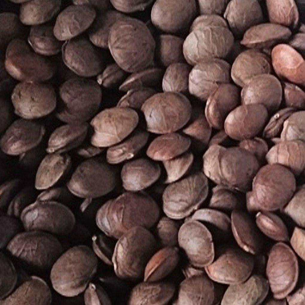 耘康印加果種子(黑子)(一公斤)(免運費)(非育苗用)