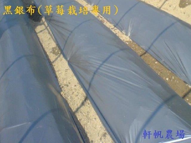 草莓苗 黑銀布(草莓栽培專用)  10元/1公尺 軒帆農場