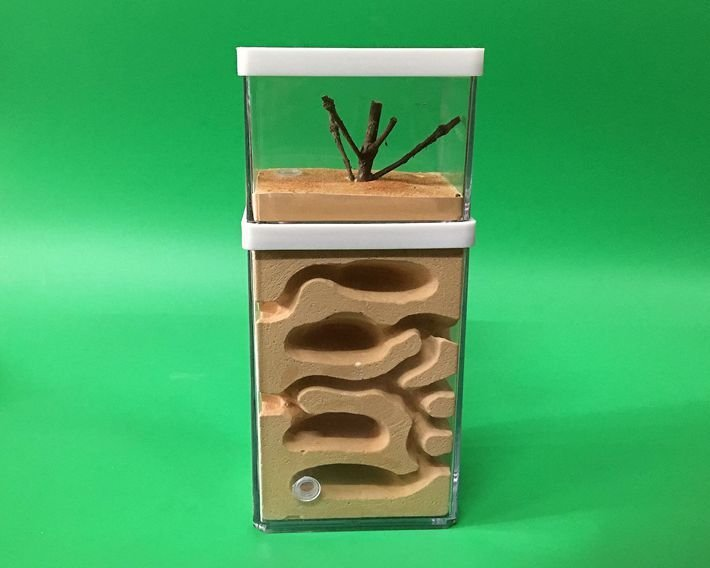 地心蟻巢-大 (生態蟻窩 螞蟻家園 螞蟻工坊)