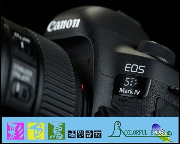 彩色鳥(二手出清)租 Canon EOS 5D mark IV Canon 5D4 5DIV 5D IV 出租