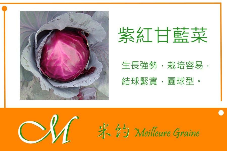 《Meilleur》紫紅甘藍菜種子10元 約100粒