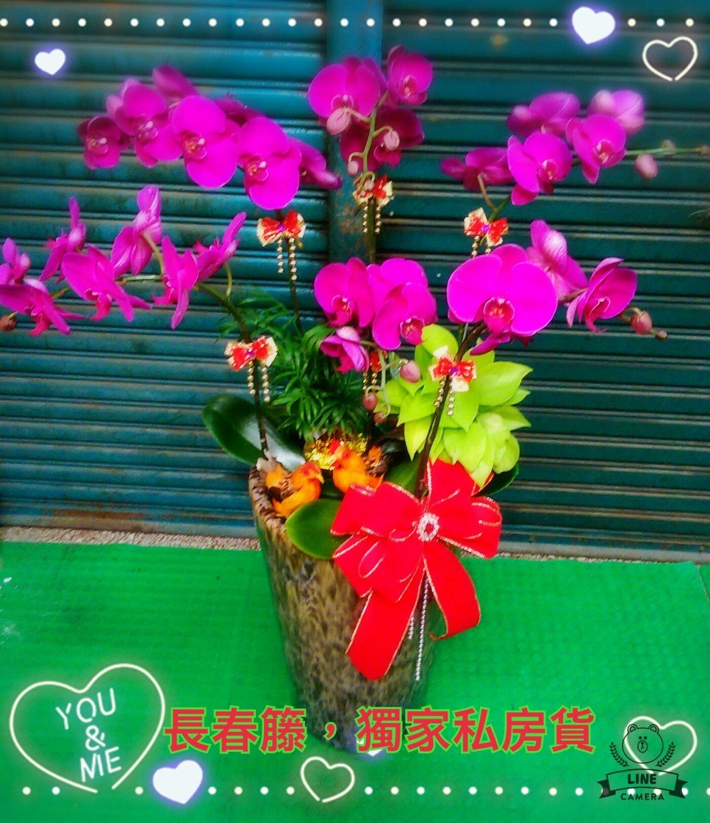 開幕,祝賀,新居落成,立地式6株蘭花 盆 2500