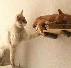 Japanese cat cafés spread to the Continent