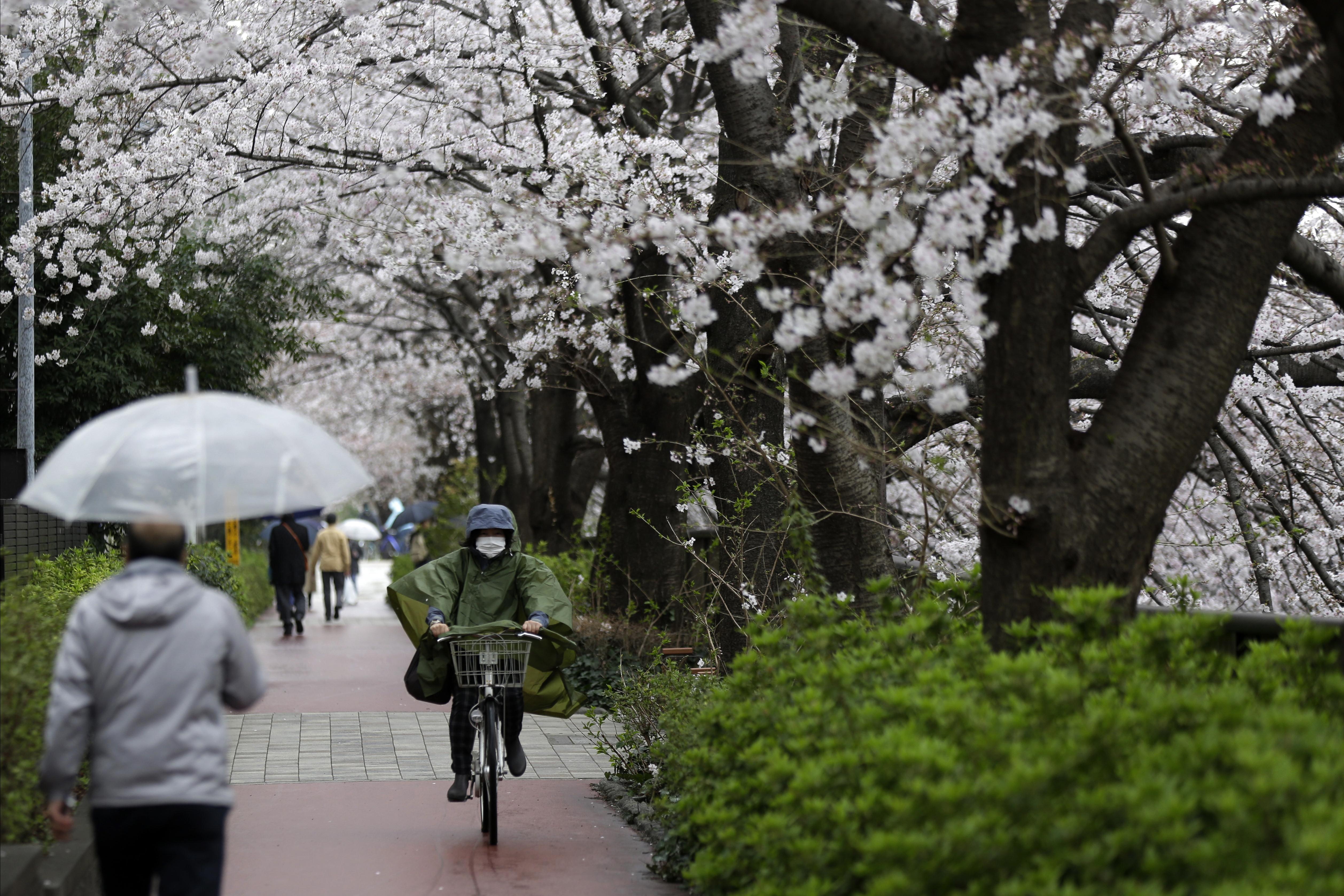 Cherry blossoms bloom over Meguro-gawa River Monday, March 23, 2020, in Tokyo. (AP Photo/Kiichiro Sato)