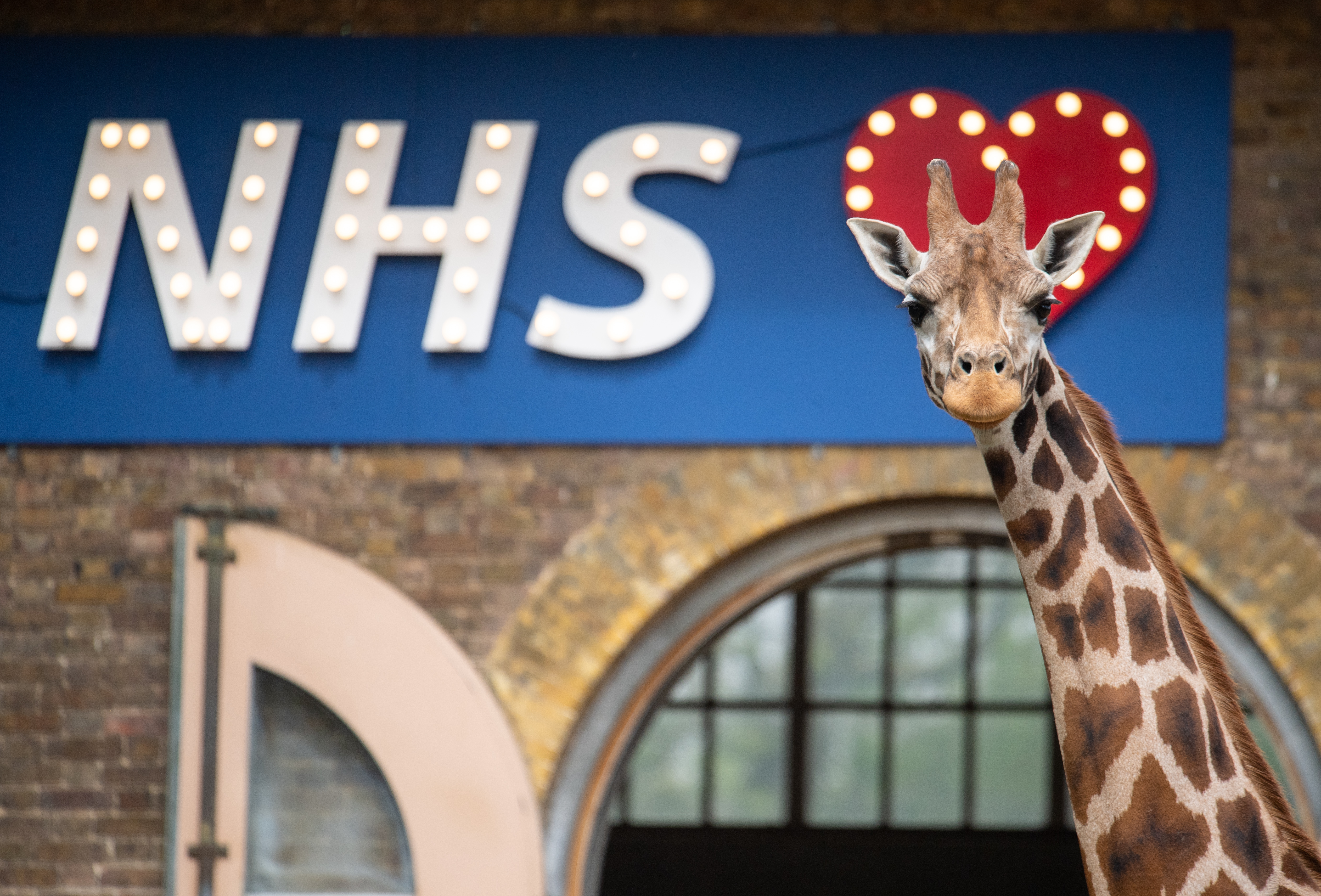 Maggie the giraffe stands with a sign showing support for the NHS at ZSL London Zoo, as the UK continues in lockdown to help curb the spread of the coronavirus.