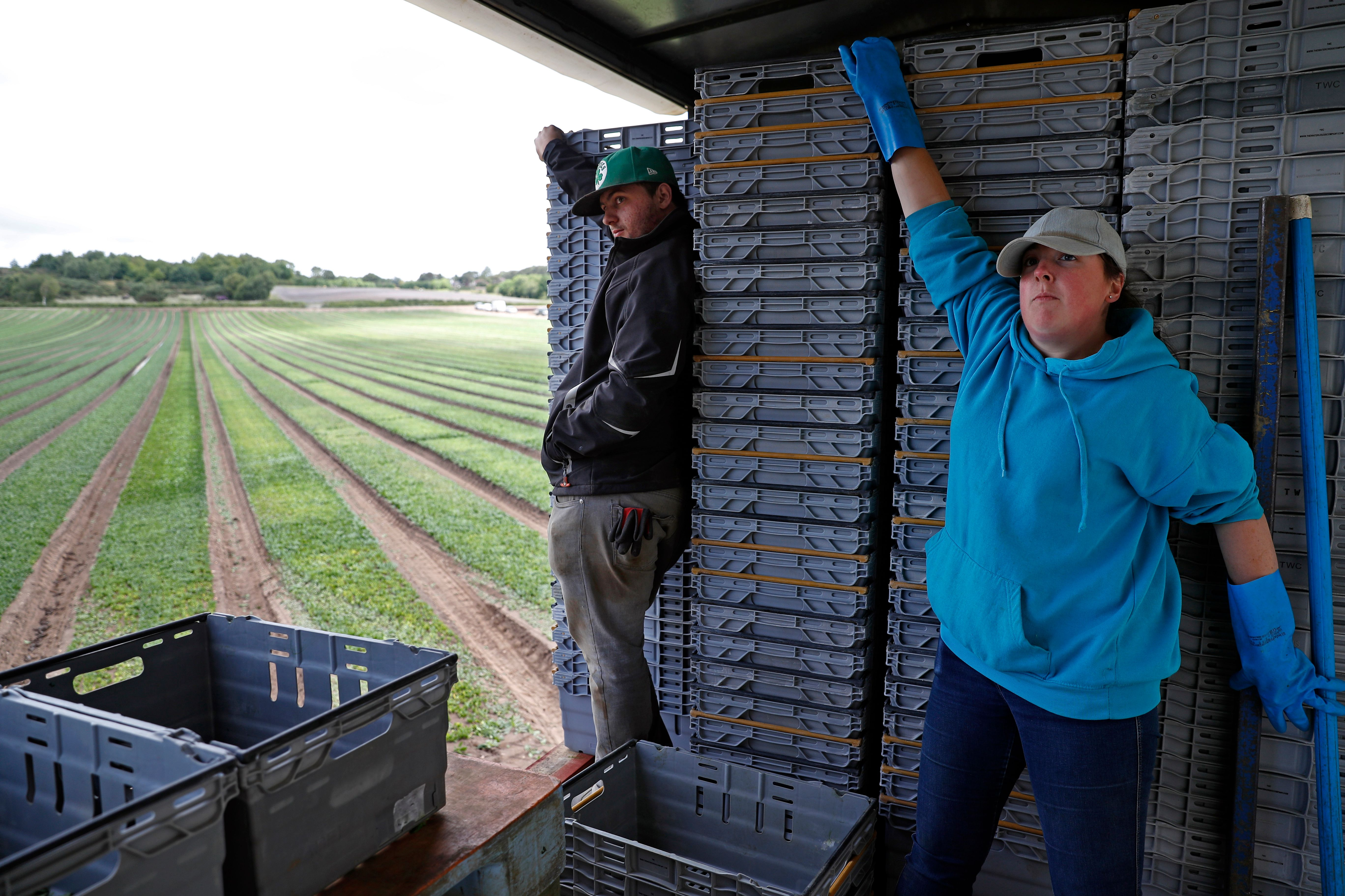 Terri Eaton (R) and Dan Racvenhill (L), part of the UK Seasonal Relief Team working for The Watercress Company hold onto crates full of spinach as the tractor manoeuvres across the field as they harvest spinach on farmland near Dorchester, in southern England on June 5, 2020, during the novel coronavirus COVID-19 pandemic. - The company have found it difficult to find staff since the Coronavirus pandemic, due to a shortage of seasonal workers from abroad, managing director Tom Amery said. (Photo by ADRIAN DENNIS / AFP) (Photo by ADRIAN DENNIS/AFP via Getty Images)