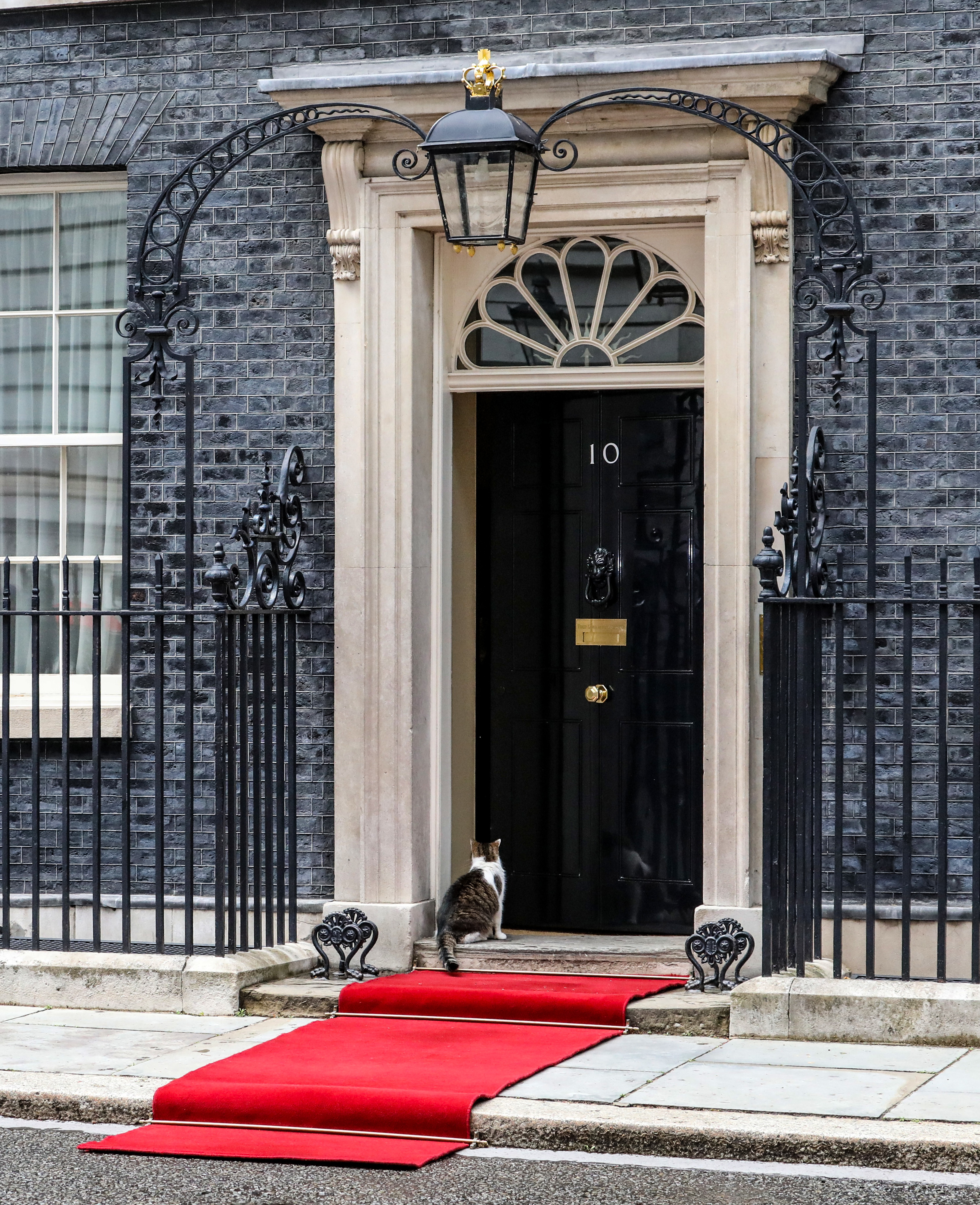 Larry, the No 10 Downing Street cat and Chief Mouser to the Cabinet Office out and about in Downing Street. (Photo by Brett Cove / SOPA Images/Sipa USA)