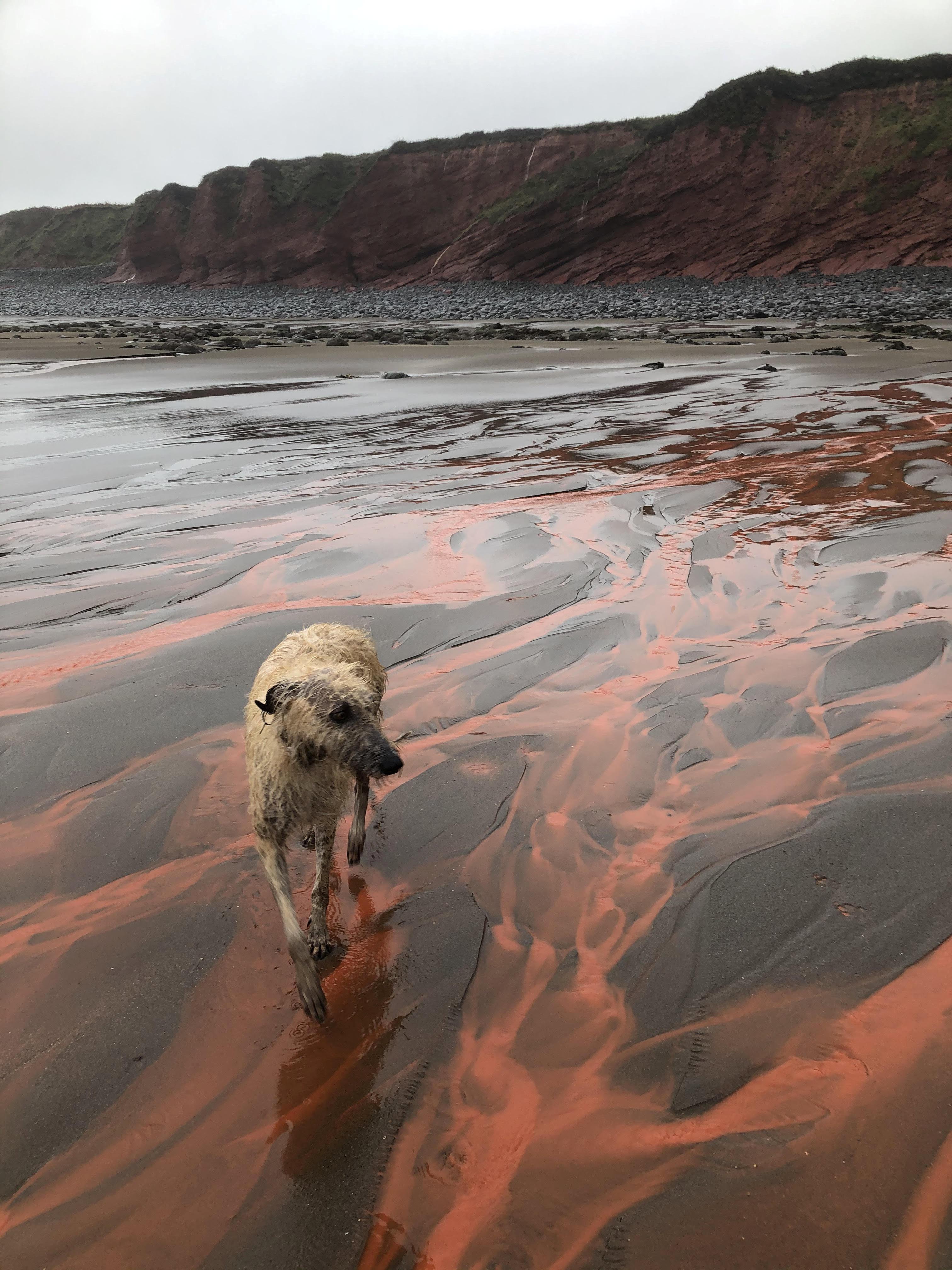 Beach turns red