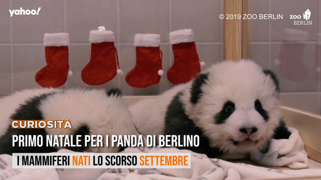 Frasi Di Buon Natale Yahoo.Primo Natale Per I Panda Di Berlino