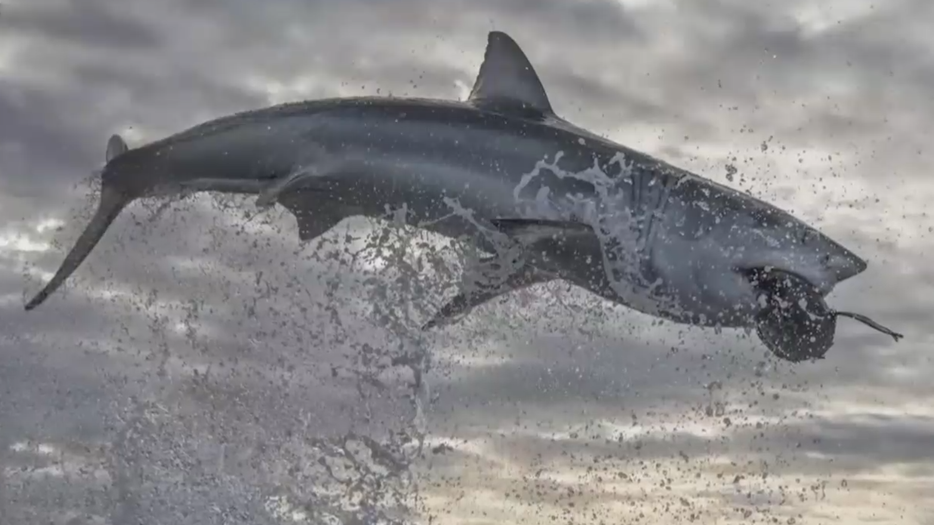 Record-breaking shark breach caught on camera: 'The photo you dream of' thumbnail