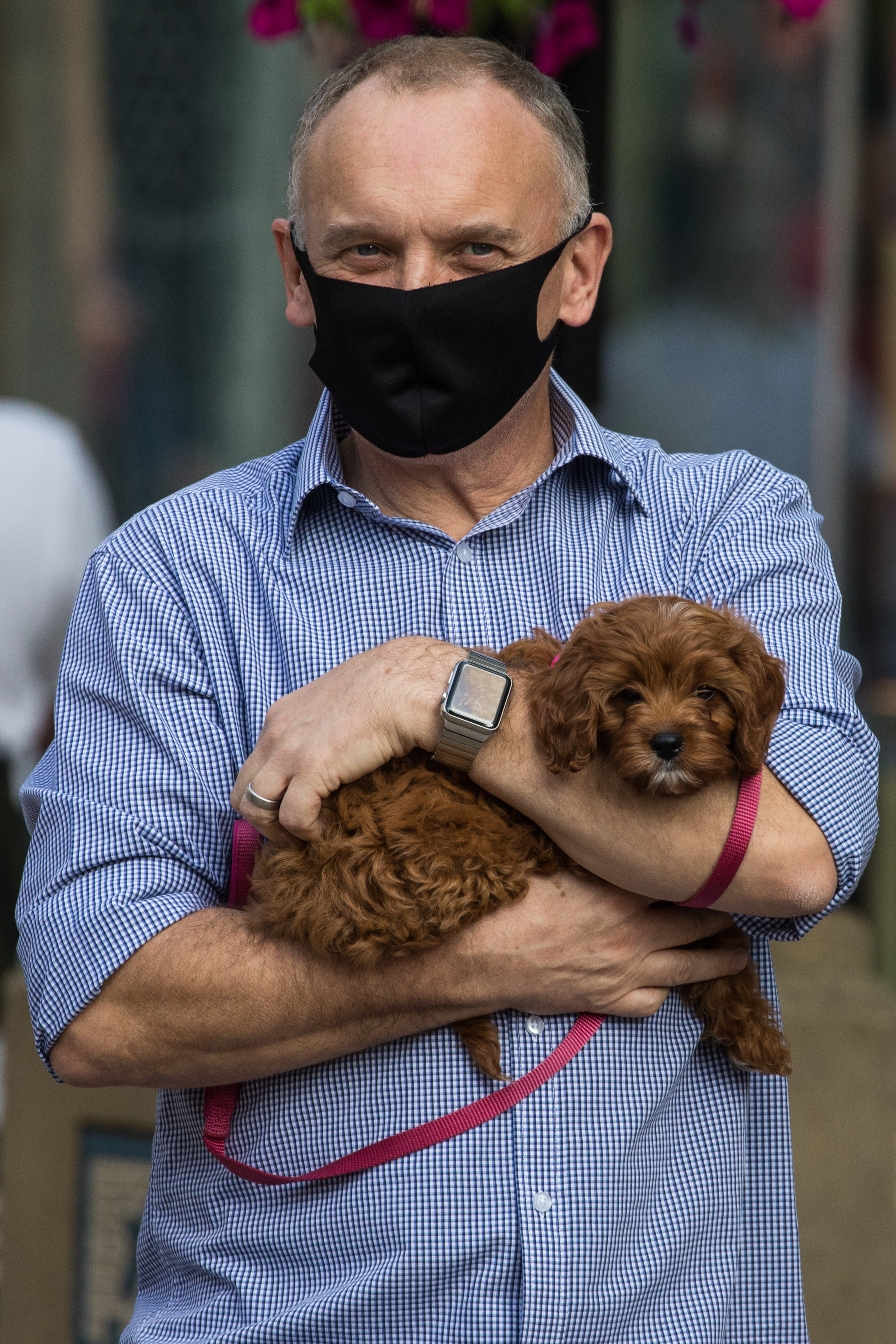 A man holding a small dog in his arms wears a face covering to help prevent the spread of the coronavirus on 20 September 2020 in Staines-Upon-Thames, United Kingdom. The Borough of Spelthorne, of which Staines-upon-Thames forms part along with Ashford, Sunbury-upon-Thames, Stanwell, Shepperton and Laleham, has been declared an area of concern for COVID-19 by the government following a marked rise in coronavirus infections which is inconsistent with other areas of Surrey. (photo by Mark Kerrison/In Pictures via Getty Images)