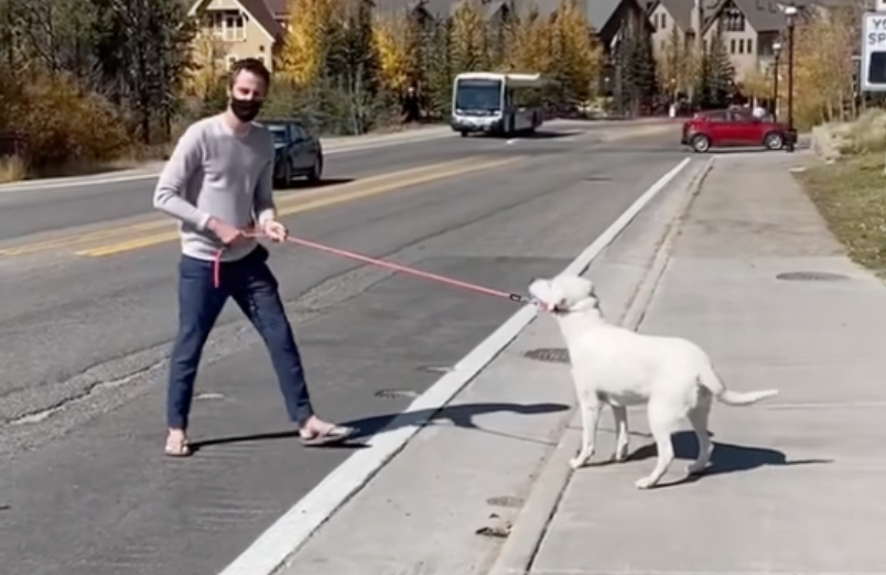 TikToker shows 'clever' trick to make sure your dog never runs into the street