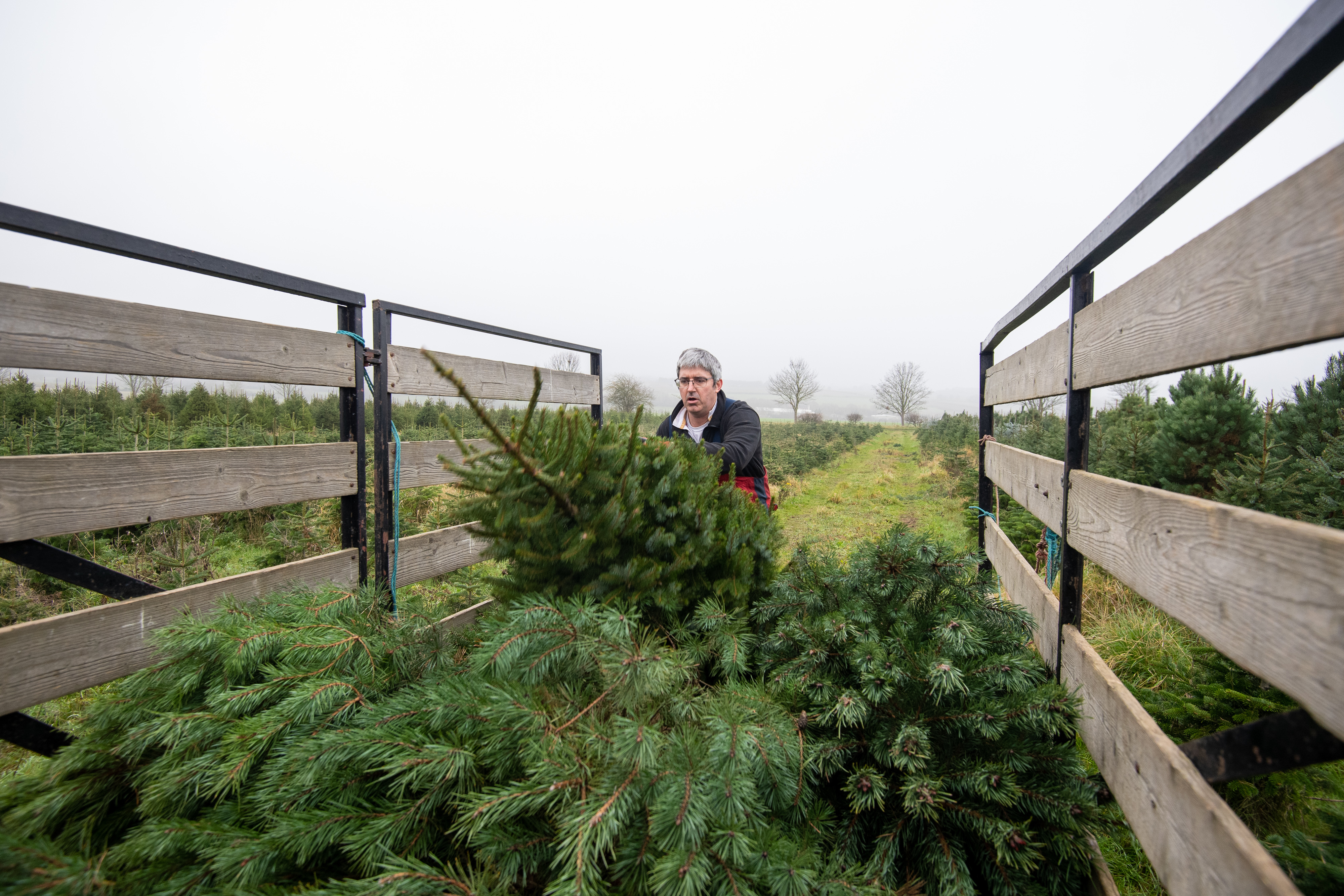 Freshley cut trees are loaded onto a trailer at Digby Farm Christmas Trees in Rutland. Families are preparing for Christmas after the UK Government and devolved administrations have agreed a temporary easing of coronavirus restrictions over the festive period, allowing three households to mix in a bubble from December 23 to 27.