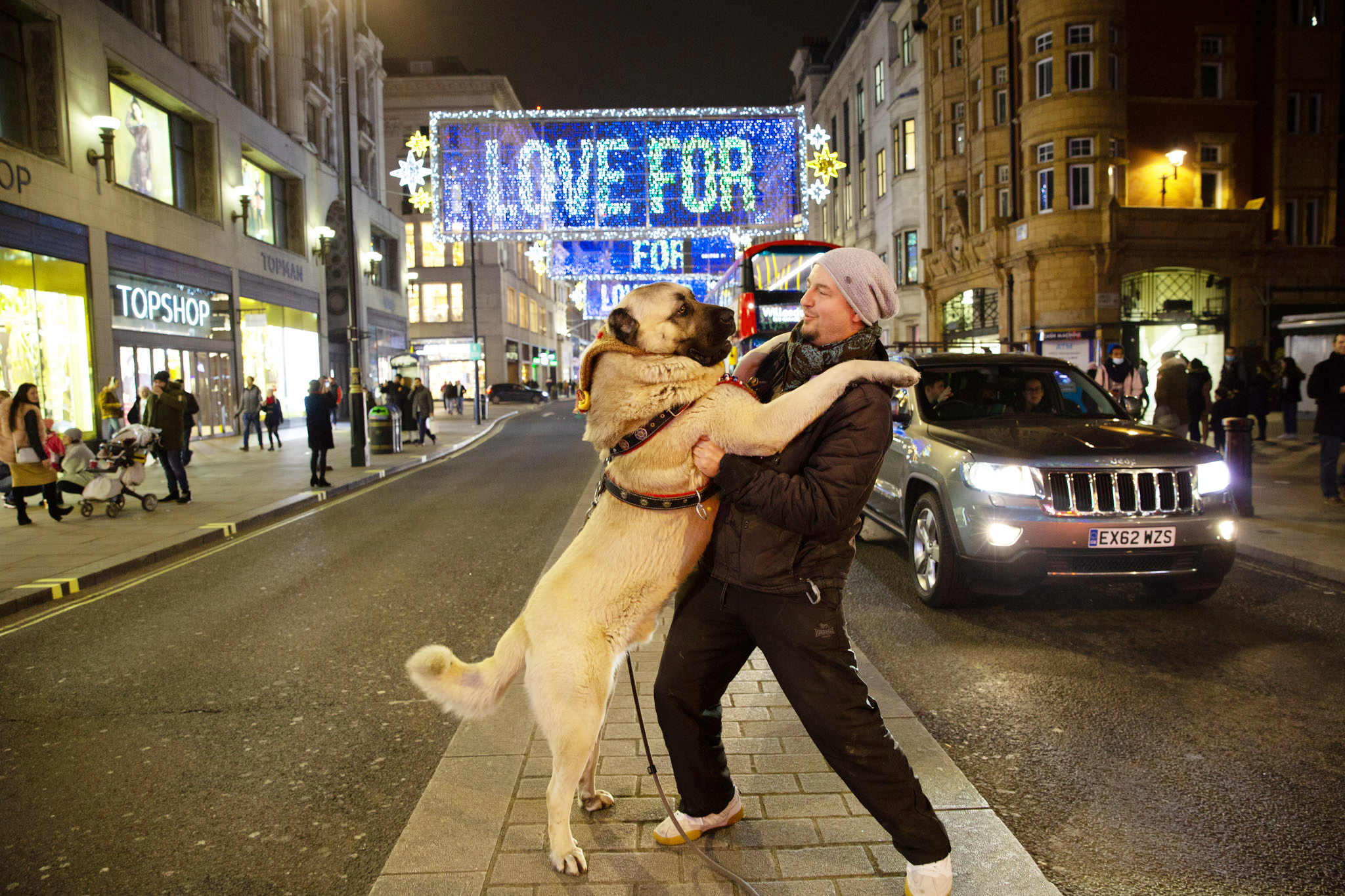 LONDON, UNITED KINGDOM - NOVEMBER 29: An Anatolian shepherd dog, brought by the owner from Turkey, is seen being taken for a walk at the streets of London, on November 29, 2020 in London, United Kingdom. The dog attracted the attention of people in the streets. (Photo by Yunus Dalgic/Anadolu Agency via Getty Images)