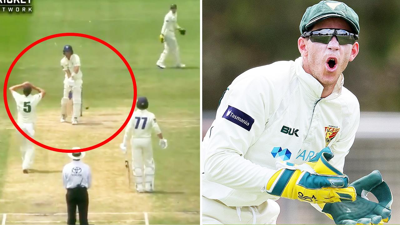Sheffield Shield Cricket Mcc Verdict On Tim Paine Dismissal