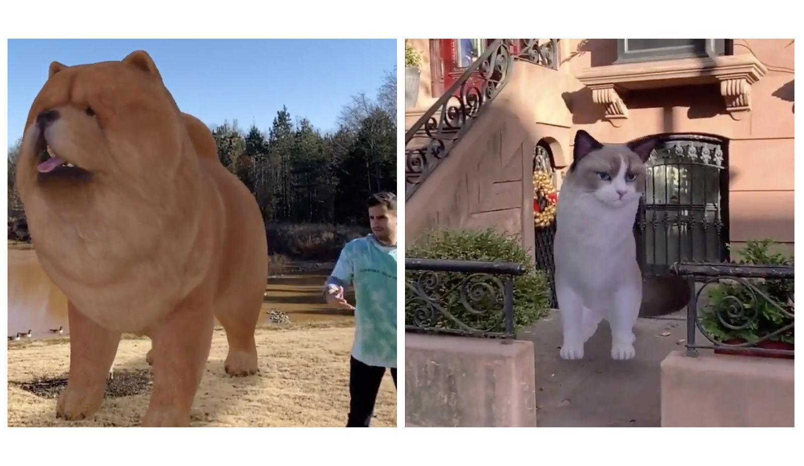 Google AR寵物