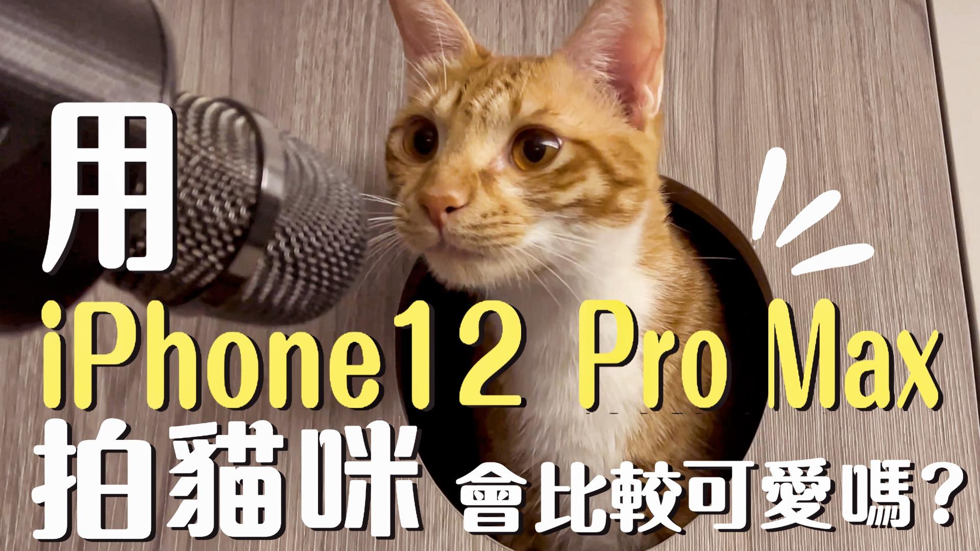 貓貓台街訪!?讓四隻貓咪自己來回答!400訂閱Q&A問答!| 吉妮普莉Cats Life