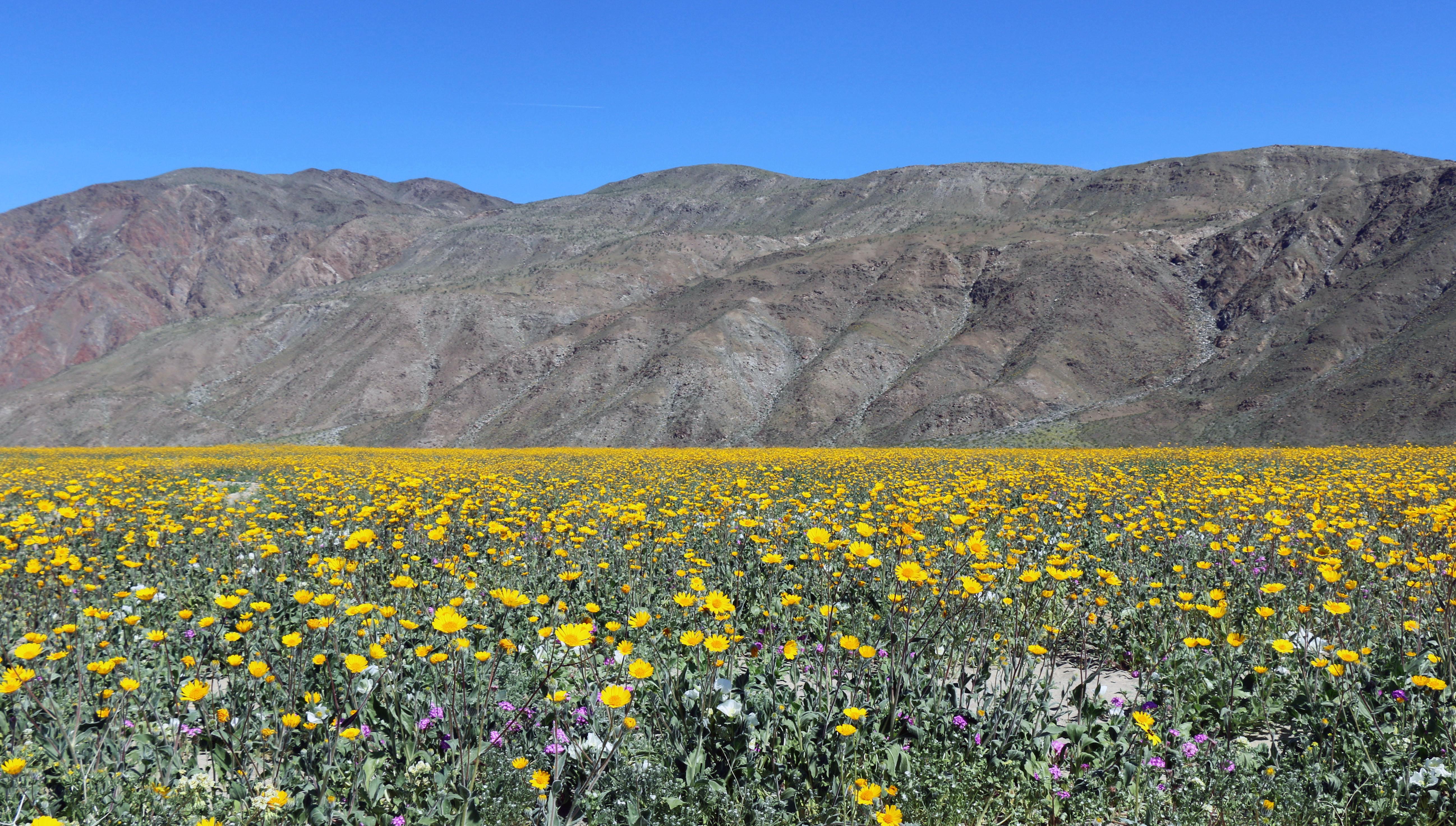 卡里佐平原 (Photo by Joanna Gilkeson/USFWS, Pacific Southwest Region USFWS from Sacramento, US, Wikimedia Commons提供, 圖片來源www.flickr.com/photos/usfws_pacificsw/33596889675)