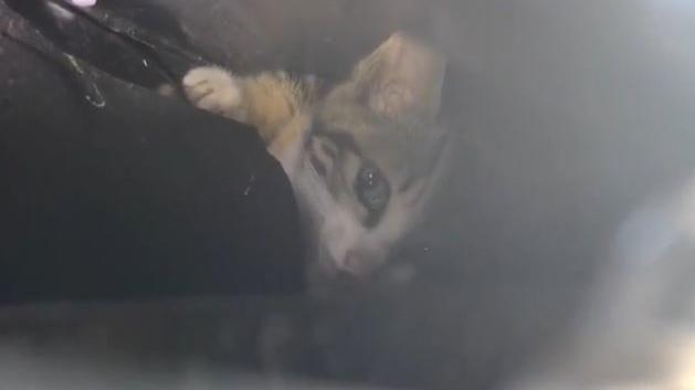 小貓卡汽車引擎蓋 拖去原廠拆車子救貓