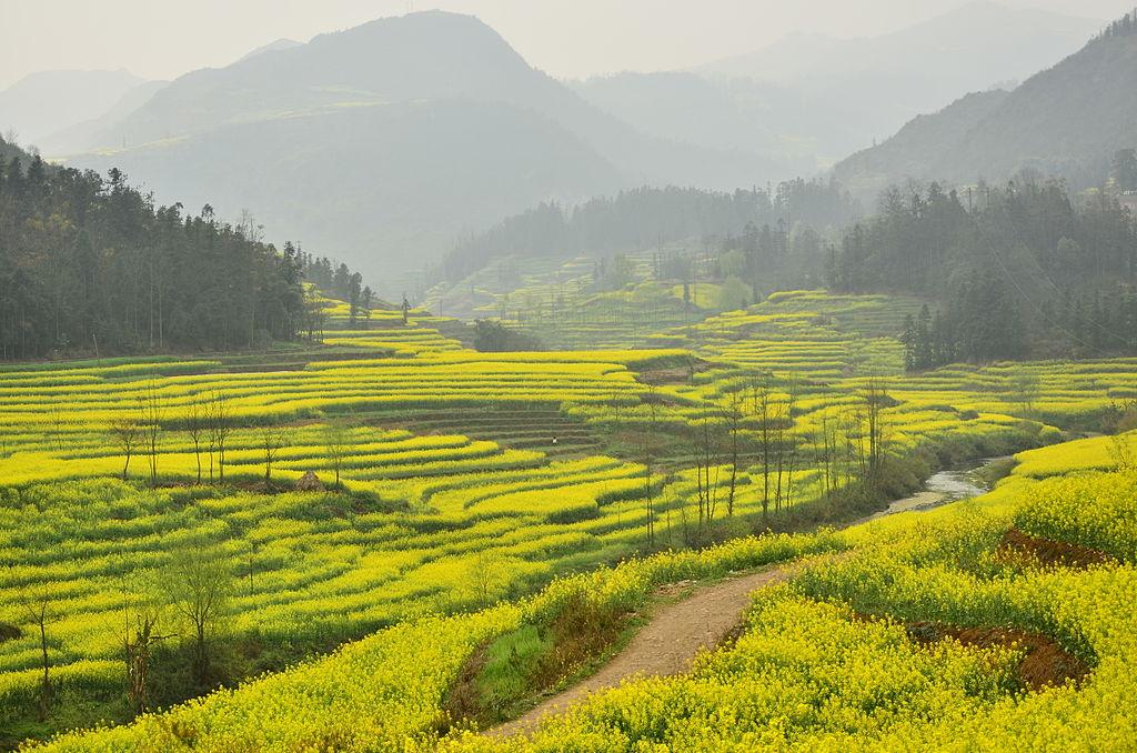 羅平縣 (Photo by Fanghong, License: CC BY-SA 3.0, Wikimedia Commons提供)