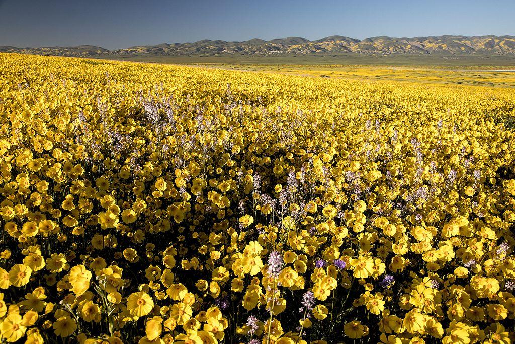 卡里佐平原 (Photo by Bureau of Land Management California, Wikimedia Commons提供, 圖片來源www.flickr.com/photos/blmcalifornia/33997425001)