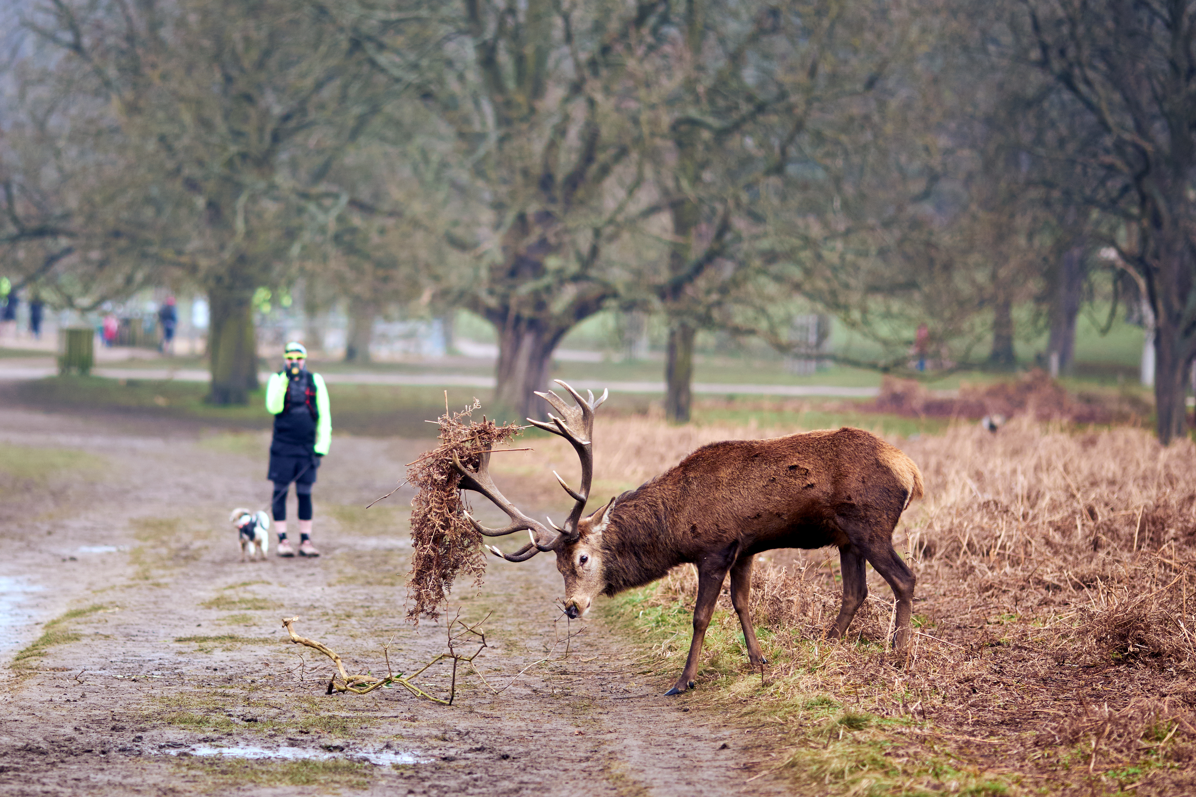 Red deer in Richmond Park, London. (Photo by John Walton/PA Images via Getty Images)