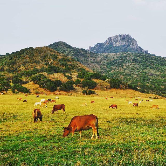 舉目可見到一群群牛羊徜徉於遼闊青青大草原,還有各類好吃好買的奶製品,非常適合當作伴手禮,送禮自用兩相宜!