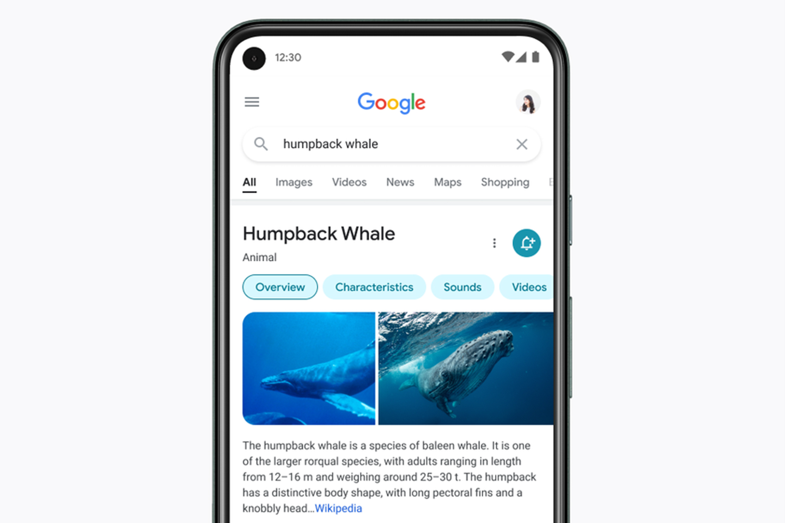 Google mobile search redesign focuses on results, not frills - Yahoo Singapore News