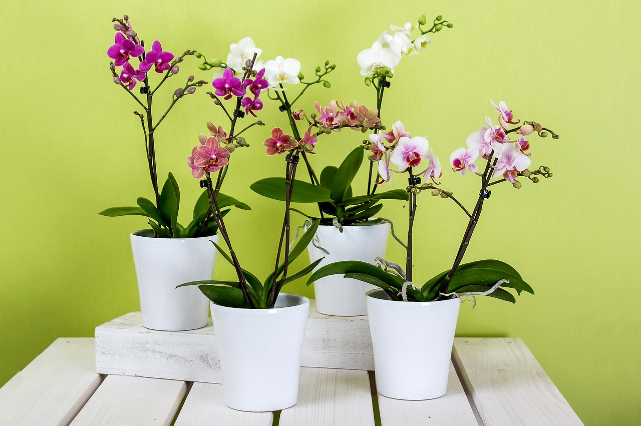 6 houseplants that need little or almost no water