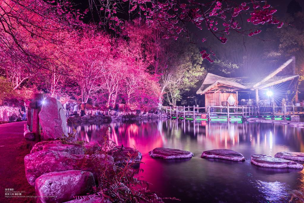 九族夜櫻(Photo Credit:汪大雄@Flickr, License: CC BY-SA 2.0,圖片來源:https://www.flickr.com/photos/57435451@N06/16636080002)