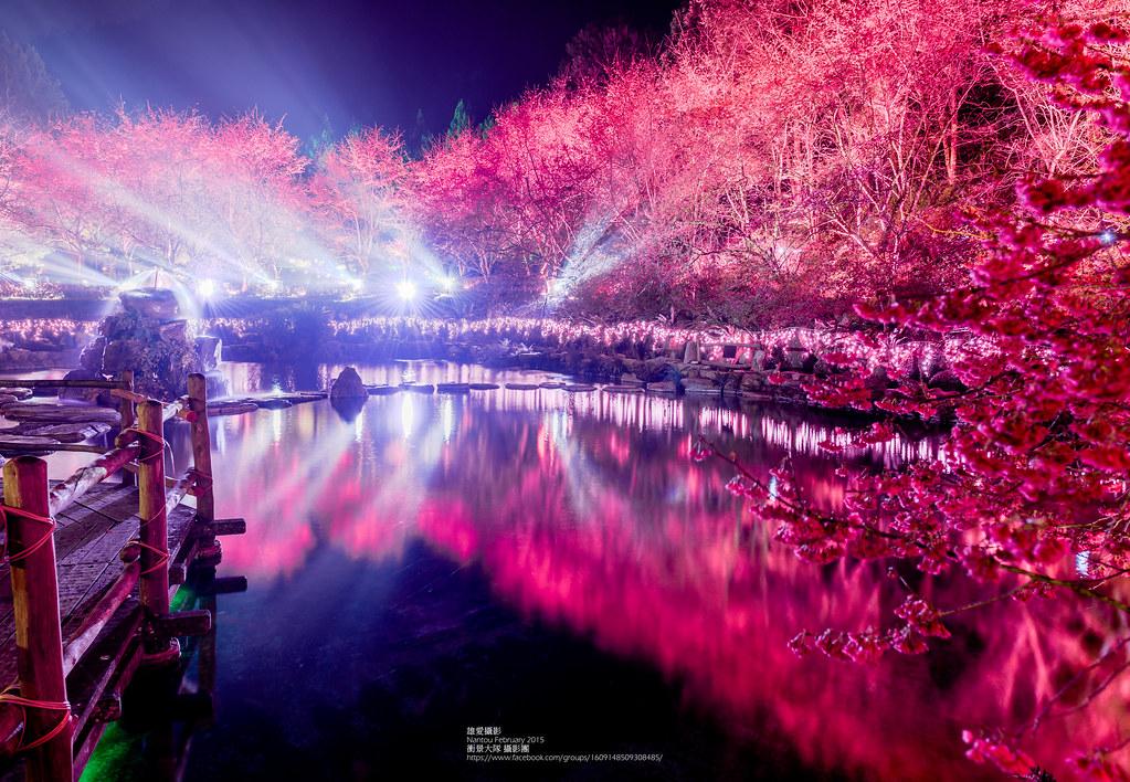 九族夜櫻(Photo Credit:汪大雄@Flickr, License: CC BY-SA 2.0,圖片來源:https://www.flickr.com/photos/57435451@N06/16593347705)