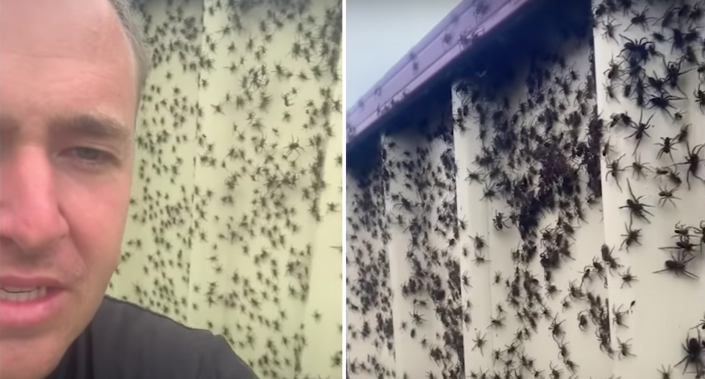 Spider 'plague' reaches terrifying heights during floods