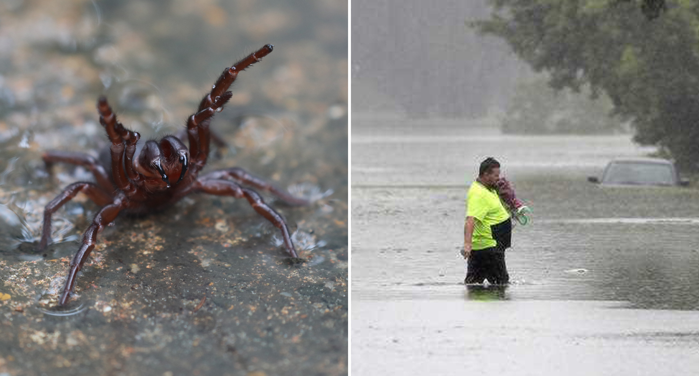 Warning over deadly funnel-web spider invasion after heavy rain
