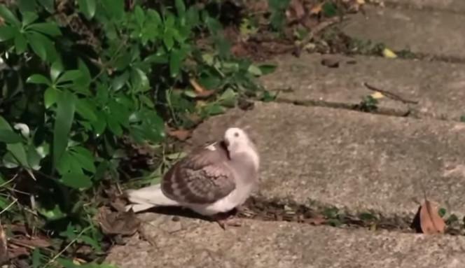 鳩 対策 カビキラー