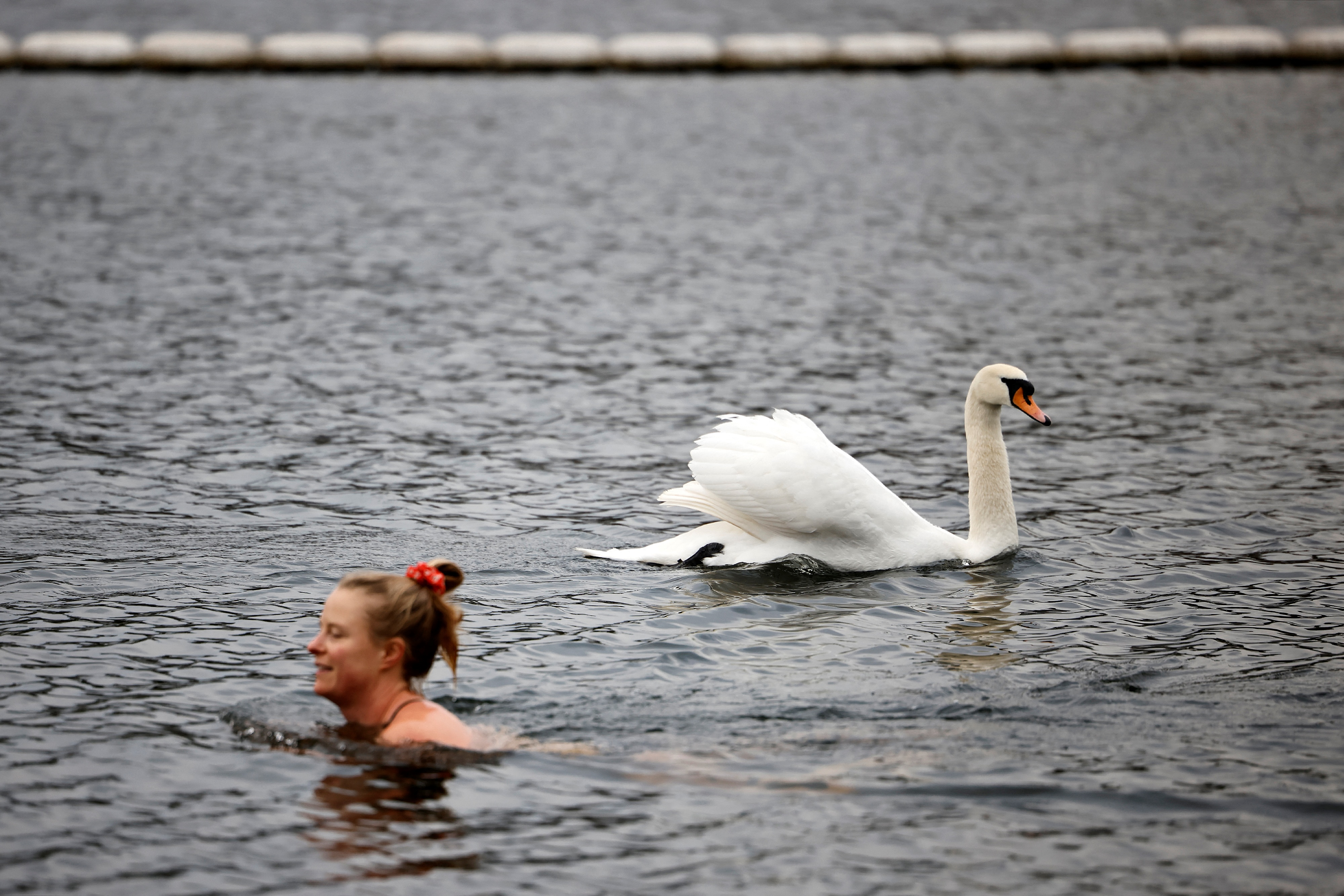 <p>A bather swims past a swan in the Serpentine Lido in Hyde Park, London as England's third Covid-19 lockdown restrictions ease, allowing outdoor sports facilities to open on March 29, 2021. - England began to further ease its coronavirus lockdown on Monday, spurred by rapid vaccinations, but governments in the rest of Europe struggled to contain Covid-19 surges. (Photo by Tolga Akmen / AFP) (Photo by TOLGA AKMEN/AFP via Getty Images)</p>