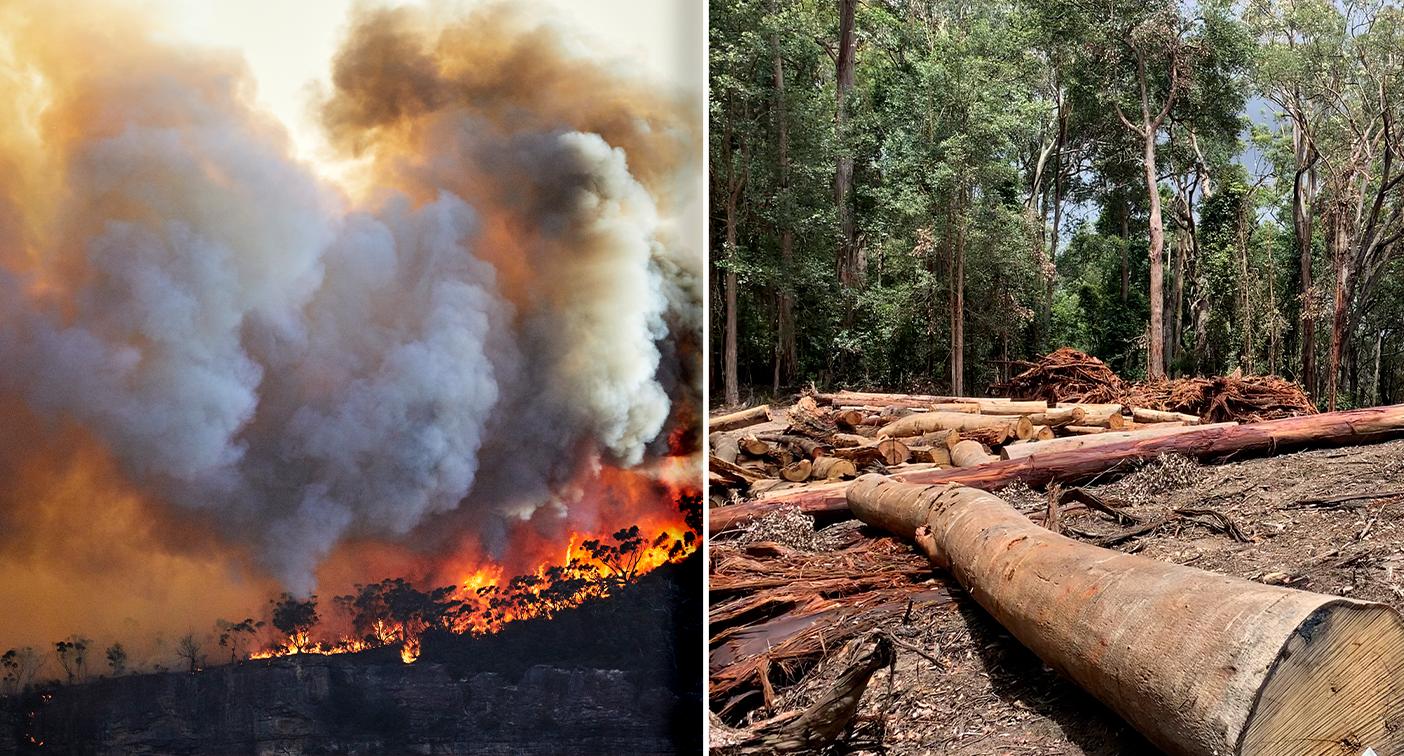 'Devastating reality check': 12 species added to Aussie extinction list