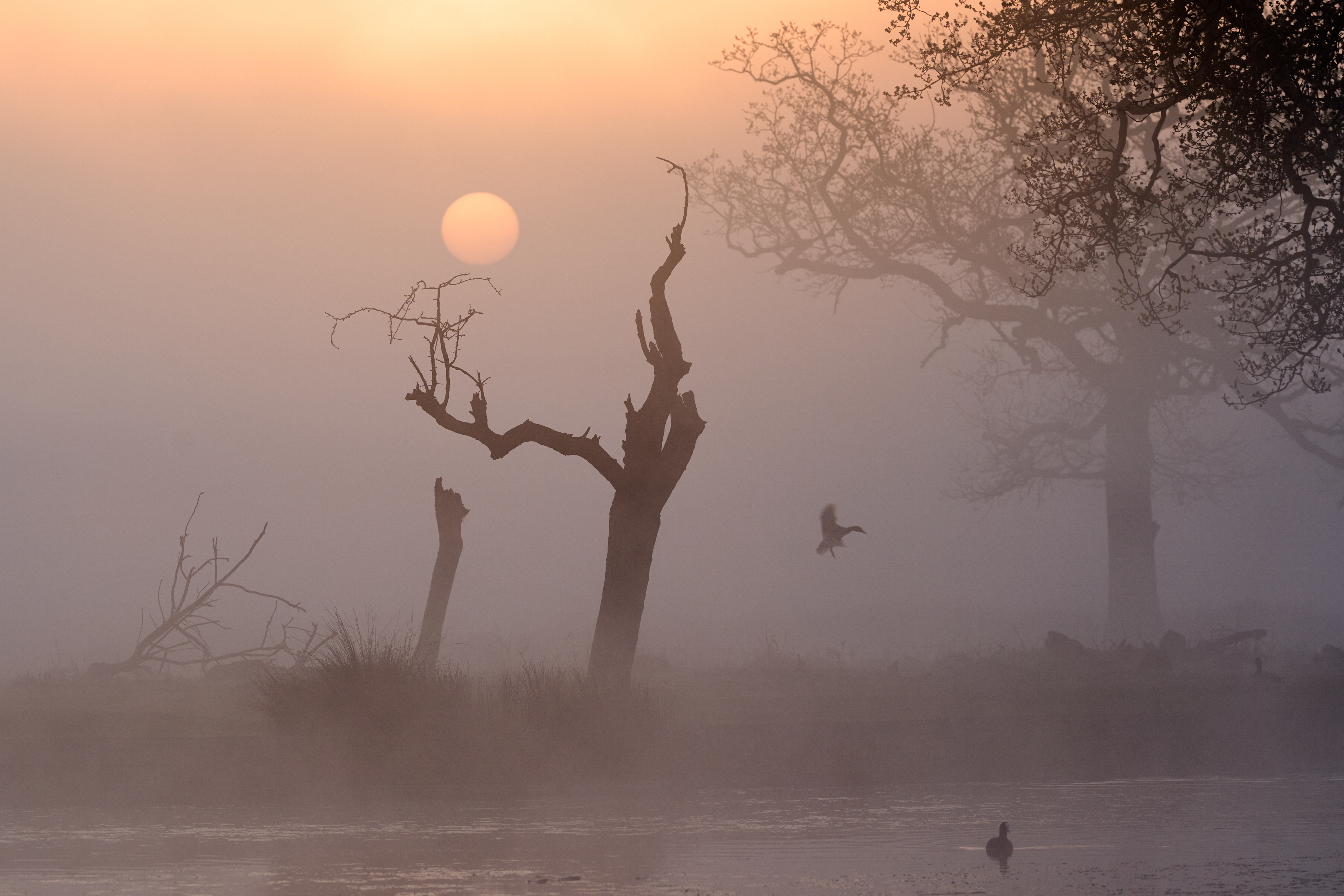 <p>The sun rises on a misty morning at Bushy Park, London. Picture date: Monday April 19, 2021.</p>